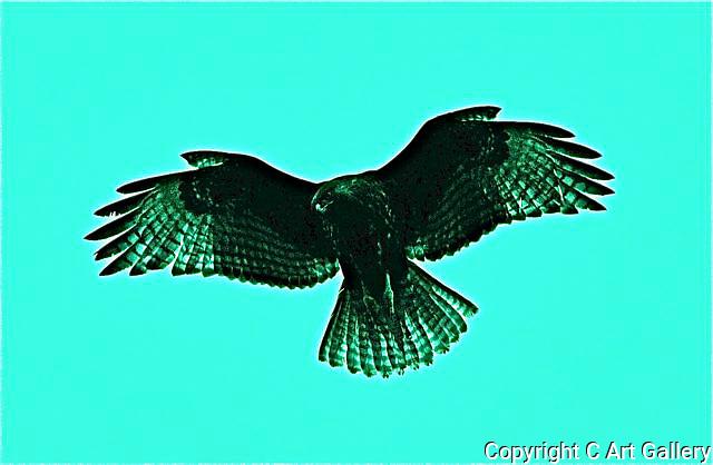Bird 5