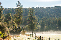 Morning mist and frost on track around Lake Matheson with farmland near Fox Glacier village, Westland Tai Poutini National Park, UNESCO World Heritage Area, West Coast, New Zealand, NZ