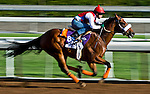 October 27, 2014:  Bronzo, trained by J.A. Inda De La Cerda, exercises in preparation for the Breeders' Cup Dirt Mile at Santa Anita Race Course in Arcadia, California on October 27, 2014. Scott Serio/ESW/CSM