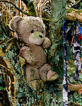 Sancreed Holy Well Cornwall, a child's teddy bear used as a votive offering above the entrance to the sacred well 1998. 1990s UK