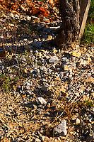 La Clape. Languedoc. Terroir soil. Vineyard. France. Europe. Schist slate soil.