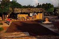 Cocoa farmers drying cocoa seeds on the ground.