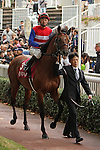 09-11-11 : Before the race the japanese horse Nakayama Festa