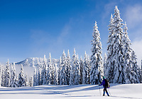 One woman snowshoeing in snow blanketed subalpine meadow, central Cascade Mountains, Washington State, USA