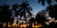 Colorful sunset with beautiful palm trees and lush vegetation silhouettes over the ocean on Paradise Island, near Nassau, Bahamas