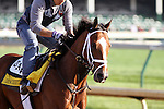 Discreetly Mine works at Churchill Downs in preparation for The Kentucky Derby. 04.29.2010