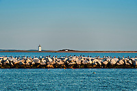 Long Point Lighthouse and jetty, Provincetown, Massachusetts, USA