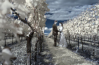 Jenn and Meade photographed in infrared at Early Mountain Vineyards in Madison County, VA. Photo/Andrew Shurtleff