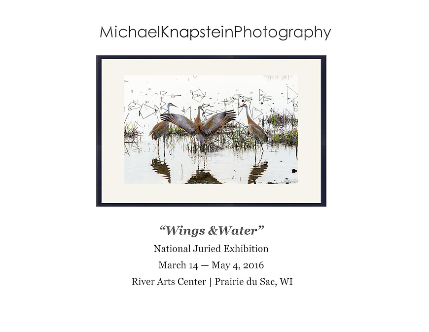 """""""Sandhill Crane Dance"""" by Michael Knapstein was selected for the national juried exhibition """"Wings & Water"""" and will be exhibited at the River Arts Center in Prairie du Sac, Wisconsin."""