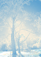 Winter infrared magical trees in Cades Cove, Tenn.