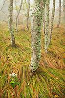 Autumn beech gap, Roan Highlands
