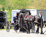 """Pennsylvania Dutch horse and buggies, Pennsylvania Dutch in Amish Country Lancaster County Pennsylvania, Amish, Horse and buggy with amish family on backroads of Pennsylvainia, buggy, amish family, buggy and horse, Commonwealth of Pennsylvania, Commonwealth of Pennsylvania, natives, Northeasterners, Middle Atlantic region, Philadelphia, Keystone State, 1802, Thirteen Colonies, Declaration of Independence, State of Independence, Liberty, Conestoga wagons, Quaker Province, Founding Fathers, 1774, Constitution written, Photography history, Fine art by Ron Bennett Photography.com, Stock Photography, Fine art Photography and Stock Photography by Ronald T. Bennett Photography ©, All rights reserved copyright Ron Bennett Photography.Com, FINE ART and STOCK PHOTOGRAPHY FOR SALE, CLICK ON  """"ADD TO CART"""" FOR PRICING,"""