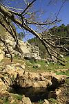 Israel, Ein Nekofa in Jerusalem mountains