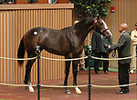 September 09, 2014:Hip #345 Unbridled's Song - Tizamazing colt consigned by Burleson Farms sold for $1,600,000 to Whisper Hill Farm (Mandy Pope) at the Keeneland September Yearling Sale.   Candice Chavez/ESW/CSM