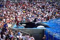 The Shamu Show at Sea World in Orlando Florida