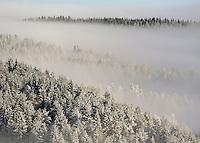 Winter forest near Holmenkollen ski jump.  (Photo:Fredrik Naumann/Felix Fetures.)