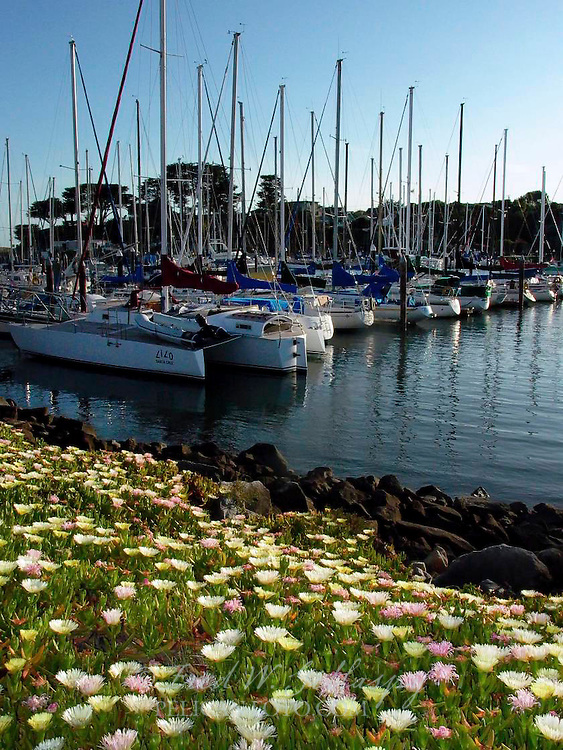 Santa Cruz Harbor 0839