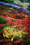 Vegetation in fall color in the Enchantment Lakes area of Alpine Lakes Wilderness, Washington