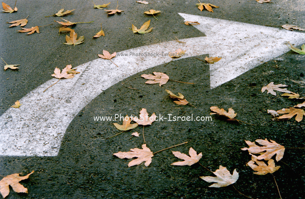 Leaf covered street marking to turn right
