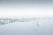 Cloudy day over snowy forest tundra on hills, Saariselkä, Finland Ⓒ Davis Ulands | davisulands.com