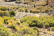 An autumn colored deciduous forest on Bureau of Land Management public land in the East Salt Creek canyon, Colorado, USA