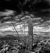 0301-009 Cactus and landscape. Arizona.