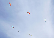 Ellenville, NY - Four hang gliders and two paragliders soar in the sky on Oct. 25, 2009.