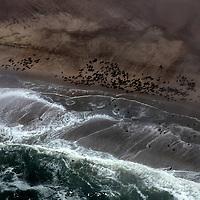 Africa, Namibia, Swakopmund. Cape Fur Seal Colonies on the coastline of Namibia.