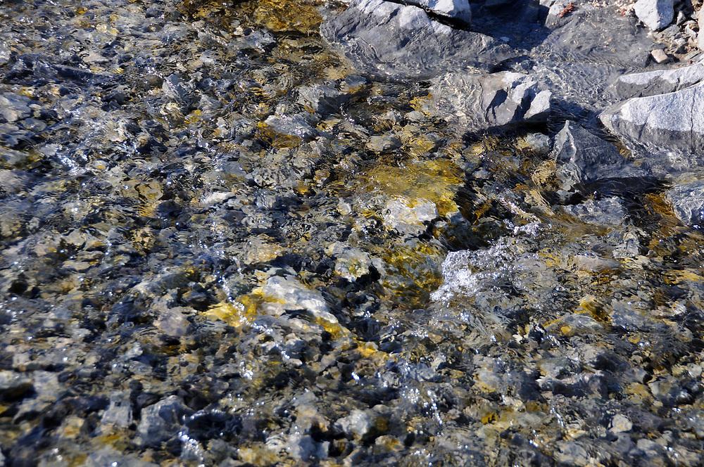 Bright green algae growing in a stream near Hope Bay. Hope Bay, Antarctica. 02Mar16