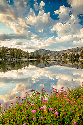 """""""Wildflowers at Paradise Lake 3"""" - Photograph of wildflowers and puffy clouds in the early morning at Paradise Lake."""
