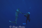 photographer James D. Watt and Galapagos shark, Carcharhinus galapagensis, off Haleiwa, North Shore, Oahu, Hawaii, USA ( Central Pacific Ocean )