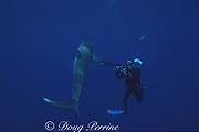 photographer James D. Watt and Galapagos shark, Carcharhinus galapagensis, off Haleiwa, North Shore, Oahu, Hawaii, USA ( Central Pacific Ocean )