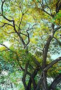 Gold tree<br />