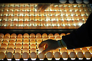 chicken egg inspection line backlighting is used to see into the eggshell and remove problematic eggs