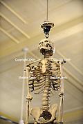 Human skeleton. 2009 Guildford Heritage Festival, Western Australia
