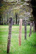 Fence posts along Sparks Lane in the Great Smoky Mountain National Park.
