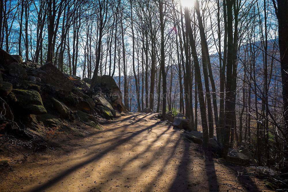 Winter forest path, Parc Natural de Montseny, Catalonia