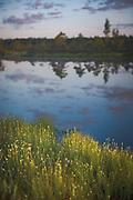 Sunrise light over white beak-sedge (Rhynchospora alba) growing on side of bog-pool, Kemeri National Park (Ķemeru Nacionālais parks), Latvia Ⓒ Davis Ulands | davisulands.com