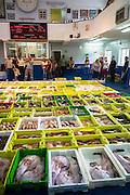 Auction of freshly-caught fish at Confradia de Pescadores de Luarca, Confederation of Luarca Fishermen, Puerto Luarca, Spain