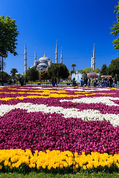 Tulip plantings in Sultanahmet in Istanbul, Turkey. During so-called Tulip Era (1718-1730), the Ottoman court and high-class society had established an immense fondness for the tulip. The Tulip mania spread soon to arts, culture, and architecture.