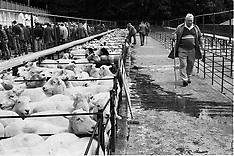Wales Sheep Market