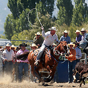 Graeme Causer from Christchurch in action during the Open Rope and Tie at the Wanaka Rodeo. Wanaka, South Island, New Zealand. 2nd January 2012