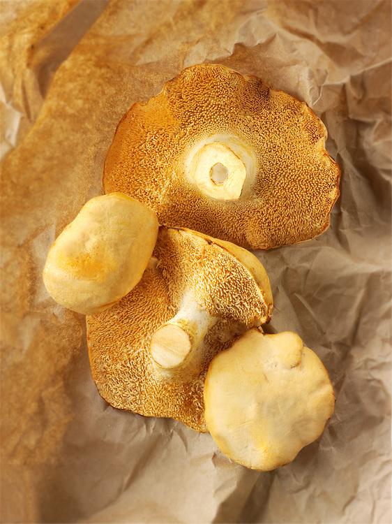 Fresh picked wiild organic Pied de Mouton Mushrooms (hydnum repandum) or hedgehog mushrooms