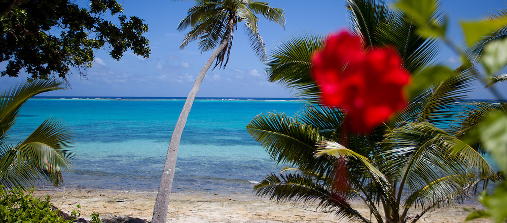 Close up of a Red Tropical Flower on the Beach, with Palm Trees and Aqua-Marine Water, Fiji