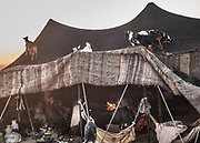 Goats on top of tents of a nomad's camp on edge of Lut Desert.