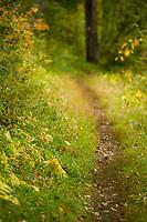 Trails in the Fall.  ©2014 Karen Bobotas Photographer