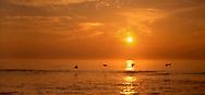 Pelicans At Sunrise, Cape Hatteras, North Carolina