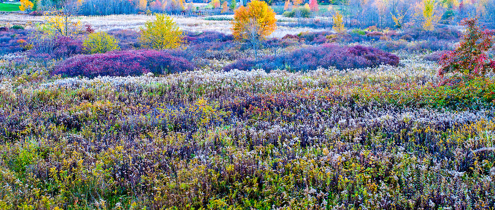 Meadow in the fall, New York, Montgomery