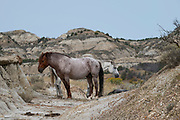 Wild Horses form a small group