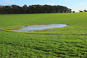 Temporary water pool in field depression showing level of water table, Ramsholt, Suffolk, England, UK